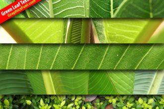Hi-res leaf textures pack
